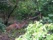 The Deers!