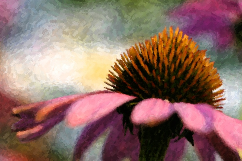 Twighlight Echinacea