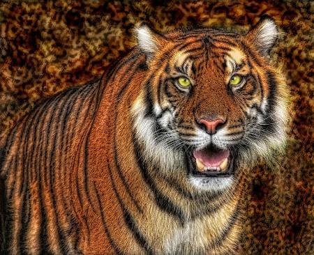 Topaz Tiger