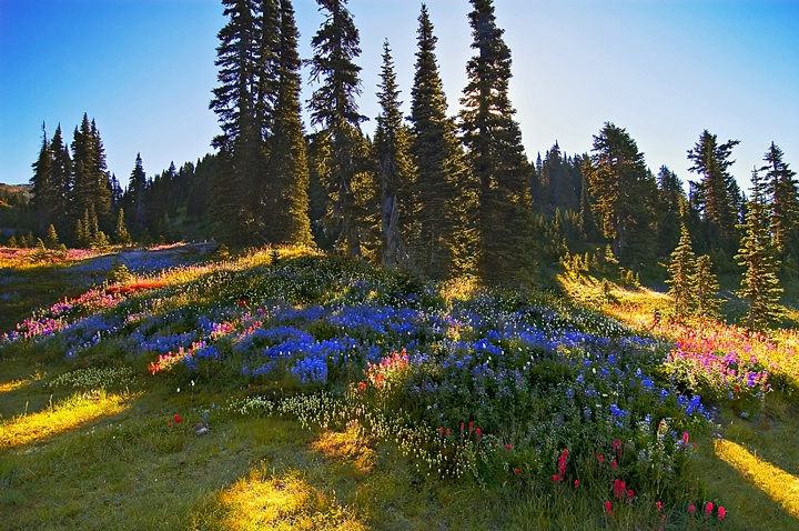 alpine garden  accidentally-le