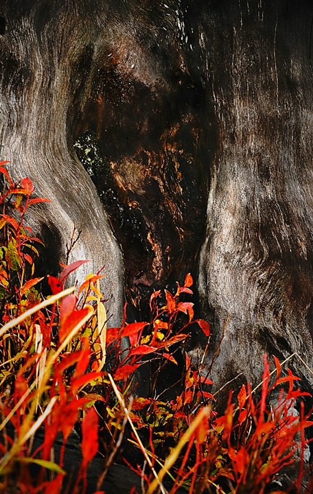 fall color scream