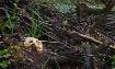 beavers last dam