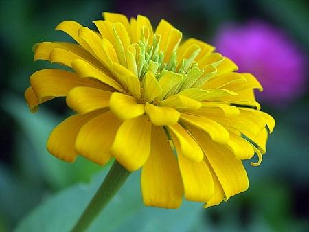 Yellow Petals of Spring!