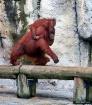 Animal Olympics -...