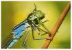 Grasshopper...Yum...