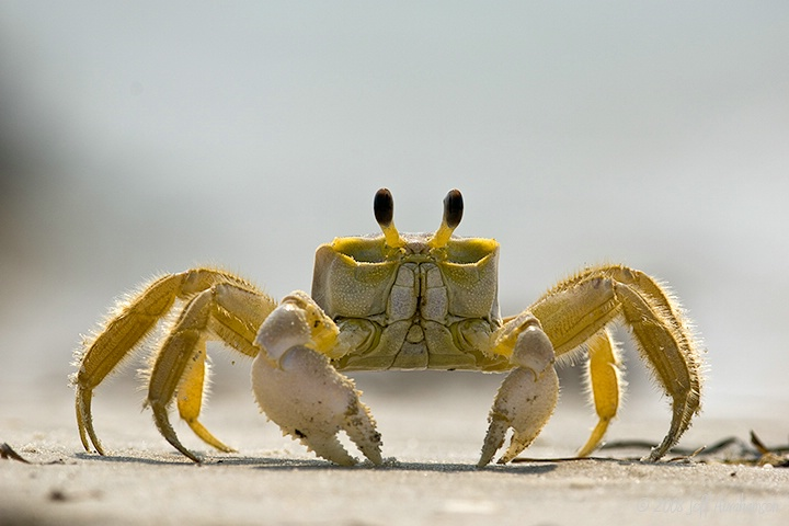 Down With Crabs II