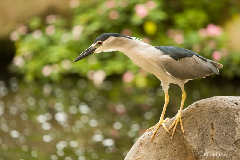 lunch time heron - ID: 6825918 © Stuart May