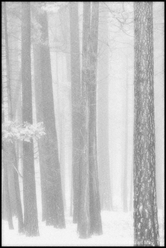 valley trees 1 - ID: 6826434 © Stuart May
