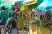 Market Day in Dom...