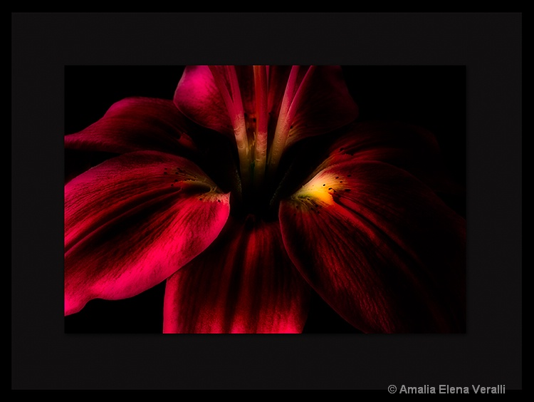 lily, red, flower, macro