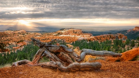 Early morning Bryce