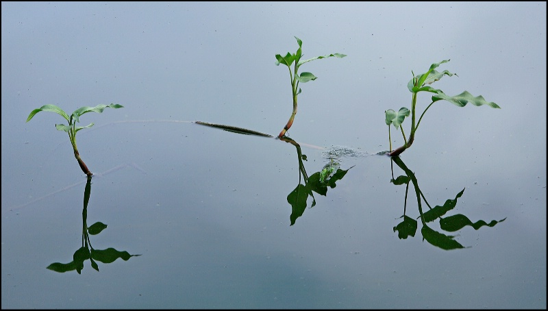 NATURE  REFLECTION  # 5