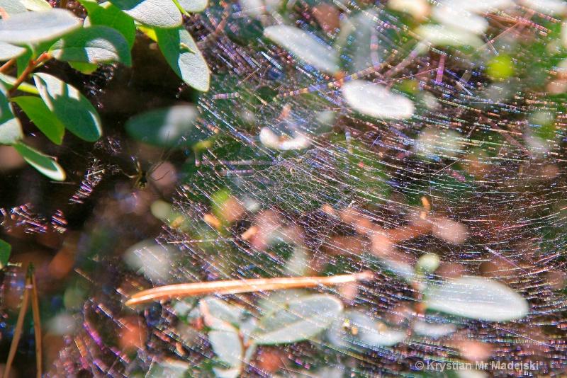 Spider with his web - ID: 6911424 © Krystian Madejski