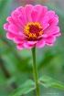 Beautiful  Bloom ...