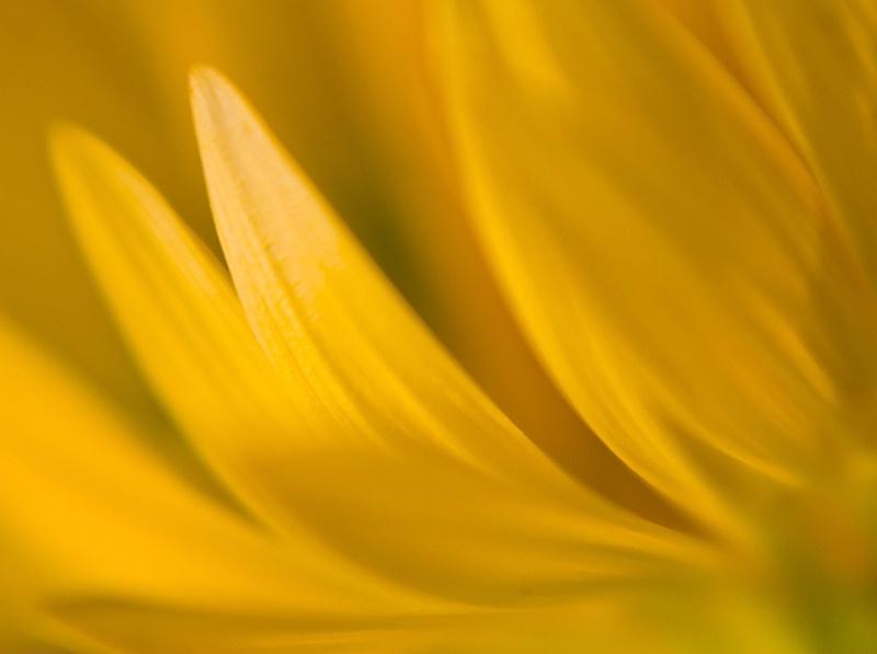 Solar Flares - ID: 6919993 © Jeff Robinson