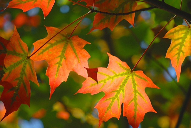 First flames of autumn