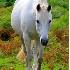 © Krystian Madejski PhotoID # 6930725: White horse