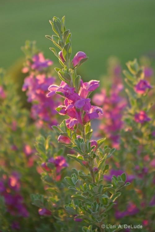 Flowers @ Sunset