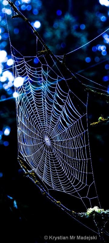 Spider's web elegance - ID: 6953575 © Krystian Madejski