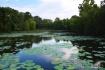 Lichterman Pond