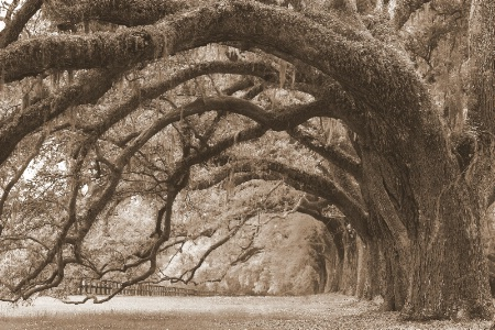 Nature's Archway #2