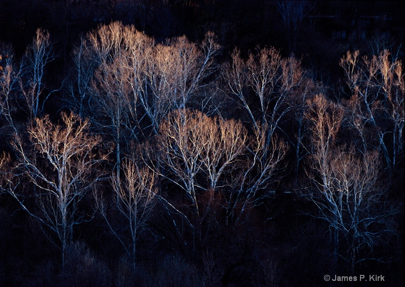 Winter Fire, Potomac River Sycamore Trees