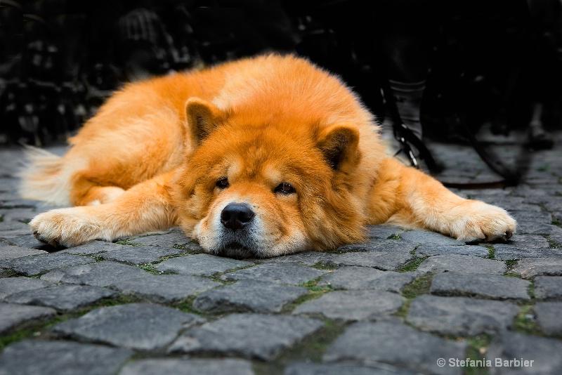 feeling down today - ID: 6981573 © Stefania Barbier
