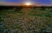 Sunrise at Pinto ...