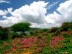 Hilltop in Bloom