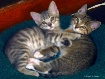 Kitties Sharing B...