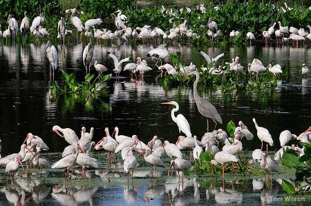 Biodiverse Pond