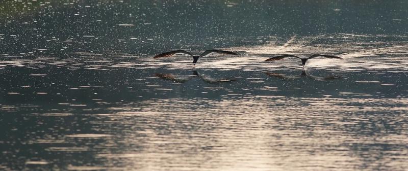 Fishing in Tandem  - ID: 7042545 © John Singleton