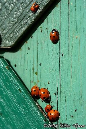Ladybug Santuary