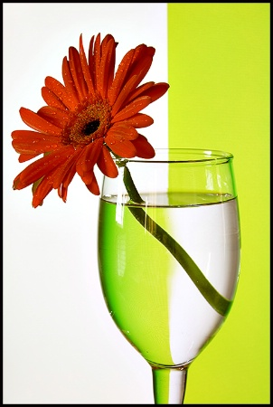 Flower & Refraction