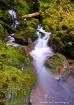 Quinalt Stream