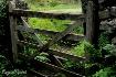 Free Range Fence