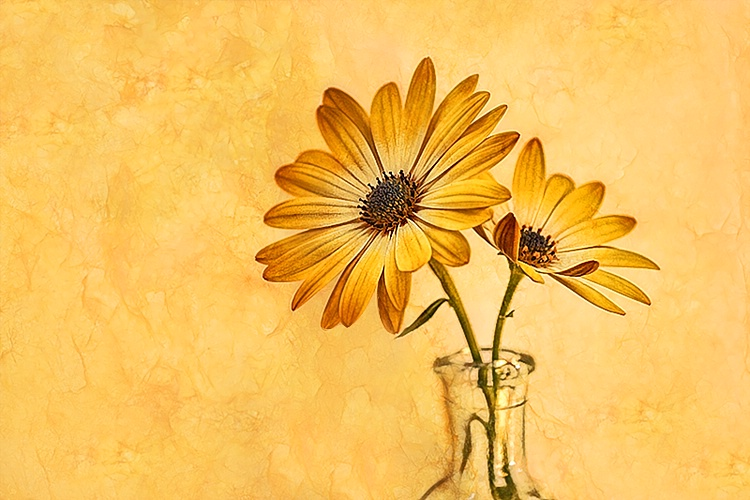 Daisies - ID: 7079278 © Laurie Daily