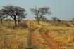 Namibian Road Les...