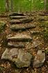 Steps Toward Earl...