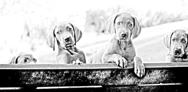 Passel of puppies