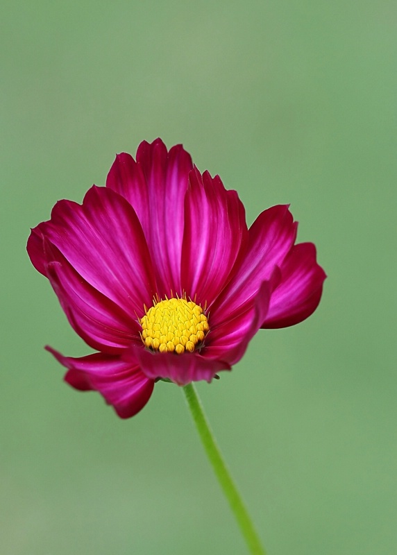 ~A Flower For You~