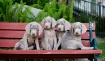 Pups on a bench
