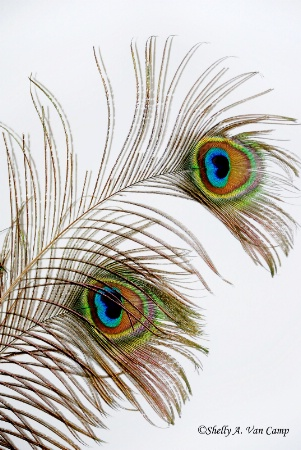 ~Colorful Feathers~