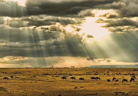 Morning in Masai Mara