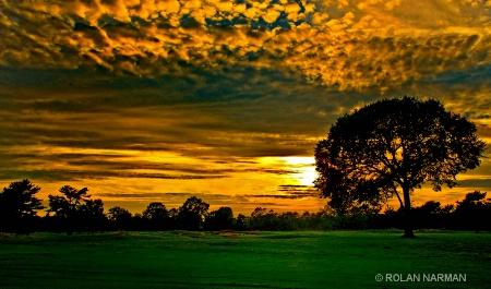Trees in Heaven