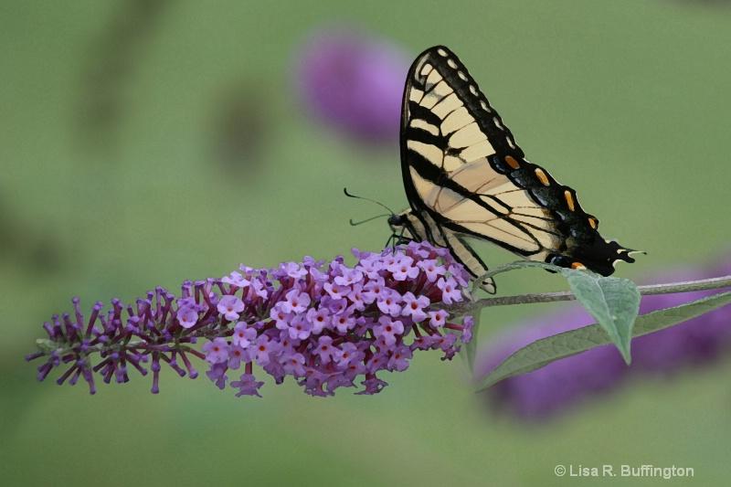 Summer Beauty #2 - ID: 7132644 © Lisa R. Buffington