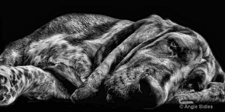 Lazy Hound