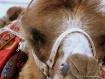 Eye of the camel