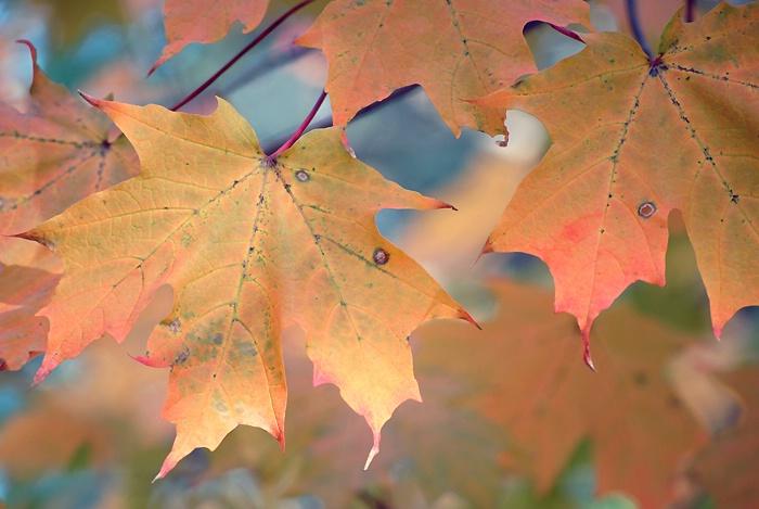 October leaf