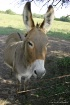 What Big Ears You...